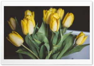 Yellow Tulips Bouquet HD Wide Wallpaper for Widescreen