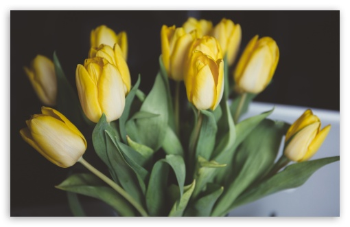 Yellow Tulips Bouquet ❤ 4K UHD Wallpaper for Wide 16:10 5:3 Widescreen WHXGA WQXGA WUXGA WXGA WGA ; 4K UHD 16:9 Ultra High Definition 2160p 1440p 1080p 900p 720p ; UHD 16:9 2160p 1440p 1080p 900p 720p ; Standard 4:3 5:4 3:2 Fullscreen UXGA XGA SVGA QSXGA SXGA DVGA HVGA HQVGA ( Apple PowerBook G4 iPhone 4 3G 3GS iPod Touch ) ; Smartphone 5:3 WGA ; Tablet 1:1 ; iPad 1/2/Mini ; Mobile 4:3 5:3 3:2 16:9 5:4 - UXGA XGA SVGA WGA DVGA HVGA HQVGA ( Apple PowerBook G4 iPhone 4 3G 3GS iPod Touch ) 2160p 1440p 1080p 900p 720p QSXGA SXGA ;