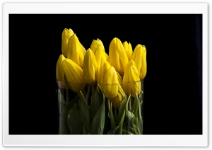 Yellow Tulips in Vase HD Wide Wallpaper for Widescreen