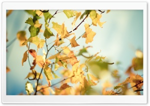 Yellowed Autumn Leaves HD Wide Wallpaper for Widescreen