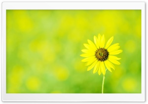 Yellowish HD Wide Wallpaper for Widescreen