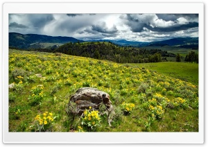 Yellowstone Wildflowers Ultra HD Wallpaper for 4K UHD Widescreen desktop, tablet & smartphone