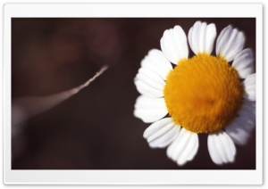 Yes, She Loves Me Ultra HD Wallpaper for 4K UHD Widescreen desktop, tablet & smartphone