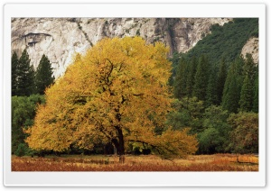 Yosemite National Park California Fall HD Wide Wallpaper for Widescreen