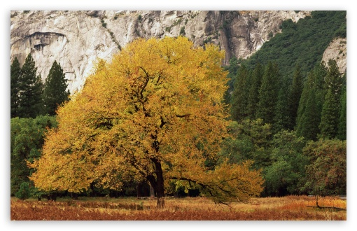 Yosemite National Park California Fall HD wallpaper for Wide 16:10 5:3 Widescreen WHXGA WQXGA WUXGA WXGA WGA ; HD 16:9 High Definition WQHD QWXGA 1080p 900p 720p QHD nHD ; Standard 4:3 5:4 3:2 Fullscreen UXGA XGA SVGA QSXGA SXGA DVGA HVGA HQVGA devices ( Apple PowerBook G4 iPhone 4 3G 3GS iPod Touch ) ; Tablet 1:1 ; iPad 1/2/Mini ; Mobile 4:3 5:3 3:2 16:9 5:4 - UXGA XGA SVGA WGA DVGA HVGA HQVGA devices ( Apple PowerBook G4 iPhone 4 3G 3GS iPod Touch ) WQHD QWXGA 1080p 900p 720p QHD nHD QSXGA SXGA ;