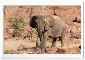 Young Elephant Ultra HD Wallpaper for 4K UHD Widescreen desktop, tablet & smartphone