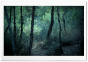 Young Forest HD Wide Wallpaper for Widescreen