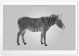 Zebra HD Wide Wallpaper for Widescreen