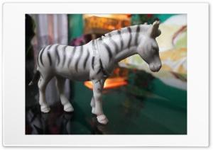 Zebra HD Wide Wallpaper for Widescreen