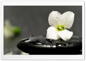 Zen Stones And Flower HD Wide Wallpaper for Widescreen