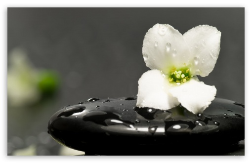 Zen Stones And Flower HD wallpaper for Wide 16:10 5:3 Widescreen WHXGA WQXGA WUXGA WXGA WGA ; HD 16:9 High Definition WQHD QWXGA 1080p 900p 720p QHD nHD ; Standard 4:3 5:4 3:2 Fullscreen UXGA XGA SVGA QSXGA SXGA DVGA HVGA HQVGA devices ( Apple PowerBook G4 iPhone 4 3G 3GS iPod Touch ) ; iPad 1/2/Mini ; Mobile 4:3 5:3 3:2 16:9 5:4 - UXGA XGA SVGA WGA DVGA HVGA HQVGA devices ( Apple PowerBook G4 iPhone 4 3G 3GS iPod Touch ) WQHD QWXGA 1080p 900p 720p QHD nHD QSXGA SXGA ;