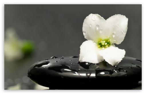 Zen Stones And Flower Ultra Hd Desktop Background Wallpaper