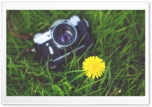 Zenit Camera and a Dandelion Flower HD Wide Wallpaper for Widescreen