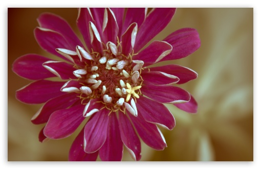 Zinnia ❤ 4K UHD Wallpaper for Wide 16:10 5:3 Widescreen WHXGA WQXGA WUXGA WXGA WGA ; 4K UHD 16:9 Ultra High Definition 2160p 1440p 1080p 900p 720p ; UHD 16:9 2160p 1440p 1080p 900p 720p ; Standard 4:3 5:4 3:2 Fullscreen UXGA XGA SVGA QSXGA SXGA DVGA HVGA HQVGA ( Apple PowerBook G4 iPhone 4 3G 3GS iPod Touch ) ; Smartphone 5:3 WGA ; Tablet 1:1 ; iPad 1/2/Mini ; Mobile 4:3 5:3 3:2 16:9 5:4 - UXGA XGA SVGA WGA DVGA HVGA HQVGA ( Apple PowerBook G4 iPhone 4 3G 3GS iPod Touch ) 2160p 1440p 1080p 900p 720p QSXGA SXGA ; Dual 16:10 5:3 16:9 4:3 5:4 WHXGA WQXGA WUXGA WXGA WGA 2160p 1440p 1080p 900p 720p UXGA XGA SVGA QSXGA SXGA ;