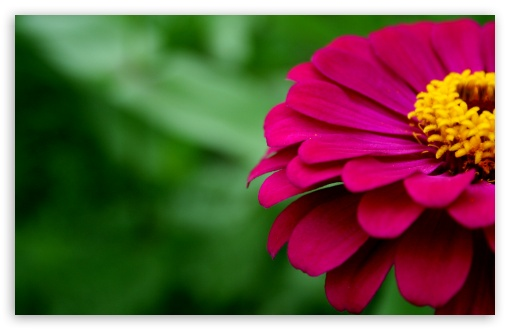 Zinnia ❤ 4K UHD Wallpaper for Wide 16:10 5:3 Widescreen WHXGA WQXGA WUXGA WXGA WGA ; 4K UHD 16:9 Ultra High Definition 2160p 1440p 1080p 900p 720p ; Standard 4:3 5:4 3:2 Fullscreen UXGA XGA SVGA QSXGA SXGA DVGA HVGA HQVGA ( Apple PowerBook G4 iPhone 4 3G 3GS iPod Touch ) ; Smartphone 5:3 WGA ; Tablet 1:1 ; iPad 1/2/Mini ; Mobile 4:3 5:3 3:2 16:9 5:4 - UXGA XGA SVGA WGA DVGA HVGA HQVGA ( Apple PowerBook G4 iPhone 4 3G 3GS iPod Touch ) 2160p 1440p 1080p 900p 720p QSXGA SXGA ;